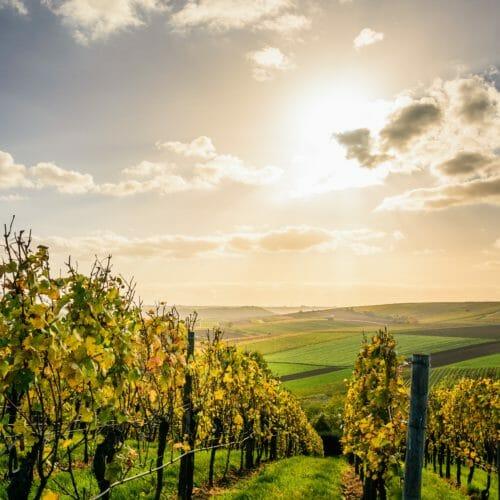 Netts Landhaus Arrangement Urlaub in Deutschland